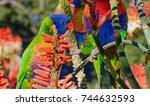 rainbow lorikeets | Shutterstock . vector #744632593