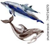 dolphin wild mammals in a...   Shutterstock . vector #744714070