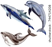 dolphin wild mammals in a...   Shutterstock . vector #744714208