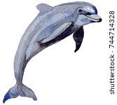 dolphin wild mammals in a...   Shutterstock . vector #744714328