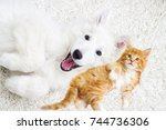 Stock photo kitten and puppy together lie fluffy carpet view from above 744736306