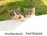 Stock photo two kittens 744783640