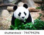 Cute Giant Panda With Tree. ...