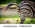 zebra shitting | Shutterstock . vector #744816523