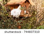 Stock photo white cat with amber eyes in a bird house or table surrounded by autumn foliage laying on it side 744837310