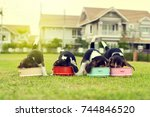 Stock photo little beagles eating feed in dog bowl 744846520
