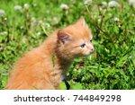 Stock photo red haired kitten on the grass kitten wallpaper striped kitten 744849298
