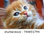 Stock photo kitten close up red haired kitten 744851794