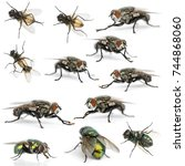 Small photo of Collection of fly, Sarcophagidae, isolated on white