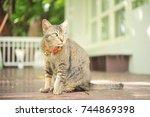 striped purebred cat. | Shutterstock . vector #744869398