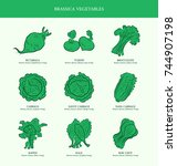 genus brassica vegetables set.... | Shutterstock .eps vector #744907198