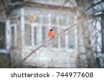 bright red common bullfinch or... | Shutterstock . vector #744977608