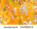yellow autumn leaves hanging...   Shutterstock . vector #744988519