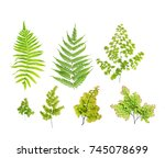 A Collection Of Green Fern Lea...