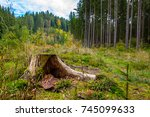 Stump Tree With Field And Trees ...