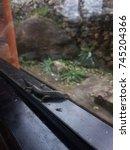 lizard at window. | Shutterstock . vector #745204366