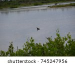 wild florida birds   Shutterstock . vector #745247956