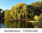 the weeping willow trees are... | Shutterstock . vector #745261360