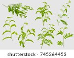 tamarind leaves isolated on... | Shutterstock . vector #745264453
