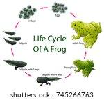 vector illustration of life... | Shutterstock .eps vector #745266763