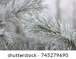 pine tree in the morning mist... | Shutterstock . vector #745279690