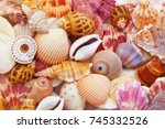 Colorful Seashells As...
