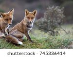 brother and sister fox in the... | Shutterstock . vector #745336414