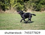 black dog running in the park... | Shutterstock . vector #745377829