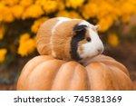 funny guinea pig sitting on... | Shutterstock . vector #745381369