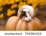 funny guinea pig sitting on... | Shutterstock . vector #745381423