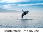 Whale Jumping Out Of Water In...