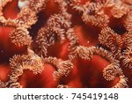 texture of the sea anemone... | Shutterstock . vector #745419148