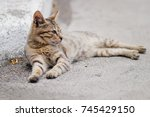 Small photo of outdoor cat , alley cat