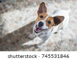 portrait of a dog jack russel... | Shutterstock . vector #745531846