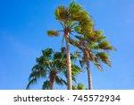 palm trees | Shutterstock . vector #745572934