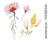 Stock photo watercolor tropical illustration with exotic australian flowers red flowers eremophila 745589344
