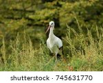 beautiful stork in the middle... | Shutterstock . vector #745631770