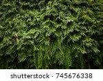 nature green leaf background... | Shutterstock . vector #745676338