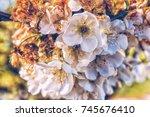 almond blossoms | Shutterstock . vector #745676410