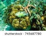 Fishes  Starfish  Sea Urchins...