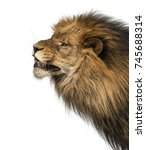 Small photo of Close-up of a Lion's profile, roaring, Panthera Leo, 10 years old, isolated on white