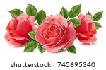 Stock photo fresh rose isolated on white background 745695340