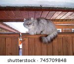 fluffy grey cat sitting on the... | Shutterstock . vector #745709848