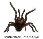 Tarantula Spider Attacking ...