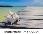 dry white conch shell on the... | Shutterstock . vector #745772014