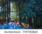 forest | Shutterstock . vector #745783864
