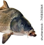 head fish big carp isolated on... | Shutterstock . vector #745830364