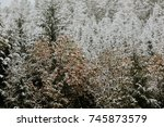 winter forest in mountains | Shutterstock . vector #745873579