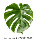 green leaf of exotic plant... | Shutterstock . vector #745913008