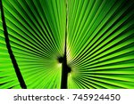 close up of tropical palm leaf... | Shutterstock . vector #745924450